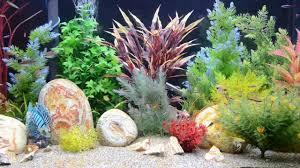 aquarium screensaver tropical fish tank youtube