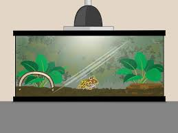 how to set up a pacman frog enclosure with pictures wikihow