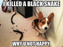 Guilt Meme - do dogs feel guilt rover com