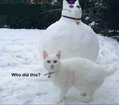 White Cat Meme - 19 white cat memes quoteshumor com
