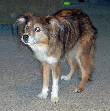 Diabetes Causing Blindness Loss Of Vision And Blindness In Your Dog
