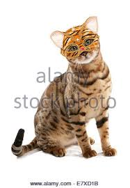 cat masquerade mask cat masquerade mask studio cutout on black background stock photo