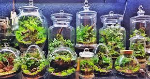 how to make your own terrarium gardener u0027s path