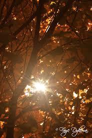 october 2011 god u0027s abundant blessings