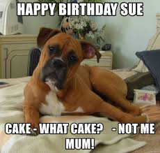 Birthday Cake Dog Meme - happy birthday sue cake what cake not me mum i am a boxer
