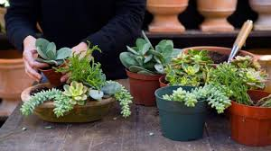 Potted Garden Ideas Homelife Potted Garden Ideas