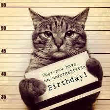 Birthday Meme Cat - funny birthday meme