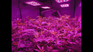 Best Led Grow Lights Kind Led Grow Light Review My 1st Grow With Kind Led Best Led