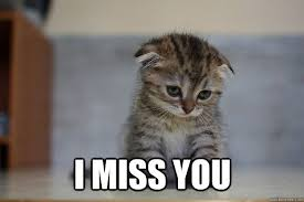 I Miss U Meme - i miss you i miss you sad kitten dad pinterest deep thoughts