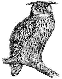 bird clipart black and white google search clip art birds