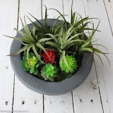 Succulent Planter Diy Faux Concrete Bowl Succulent Planter The Happy Housie