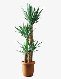 plante verte bureau le paysage de larbre en matière de bureau une plante verte vert