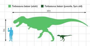 40 meters to feet 40 meter to feet tarbosaurus theropods wiki project ove arup s 170
