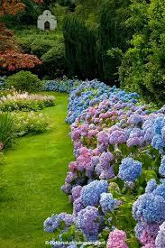 best 25 hydrangea garden ideas on pinterest white hydrangea