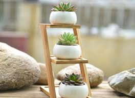 succulent planter 10 tiny gardens you can grow on your