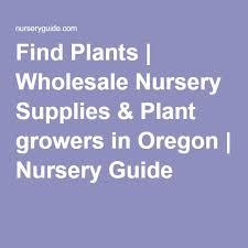 Nursery Plant Supplies by Best 25 Wholesale Nursery Ideas On Pinterest Painted Rocks Owls