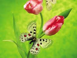 Discount Wallpaper Borders Funny Image Collection Butterfly Wallpaper For Home