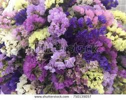 statice flowers statice flowers yellow pink purple statice stock photo 750139057