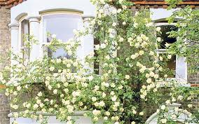 Support For Climbing Plants - social climbers how to cover a house in plants telegraph