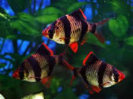 aquarium fish u2013 aquarium good weather in the ocean