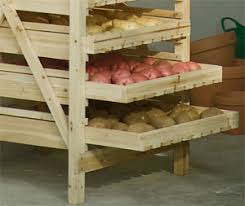 growing sweet potatoes in containers grow sweet potatoes in a