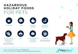 9 holiday food hazards for pets