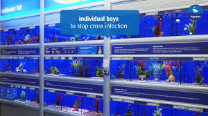 Home Blue Fish Making Our Pets At Home Aquatics Youtube