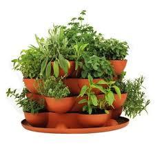 indoor herbal tea herb garden starter kit u0026 self watering planter