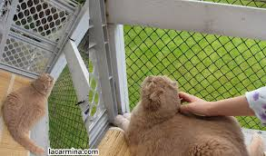 balcony netting for cats high rise syndrome keeping your cat safe
