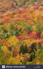 fall color white mountains hampshire stock photo