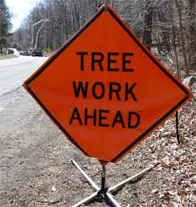 utility tree trimming in shelton disastrous or necessary