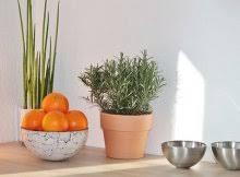 Indoor Container Gardening - indoor u0026 container gardening archives sustainable gardening news