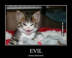 Evil Cat Meme - evil cat meme cat planet cat planet