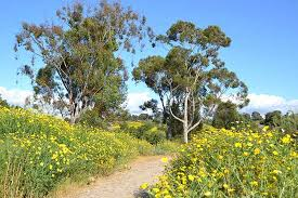 Flower Area - super bloom desert wildflower reports for southern california by