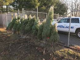 waterford offering free trees for needy families