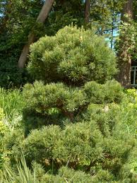 pruning native plants wshg net pruning sustainably featured the garden september