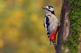 winter birds in our garden pre tend be curious