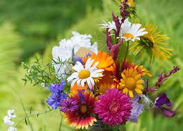 Club Summer Garden - how to give your garden what it needs to survive summer garden club