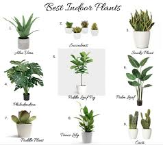 top house plants top indoor house plants png 845 755 planters pinterest