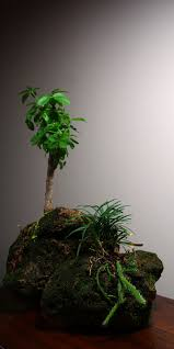 planting and caring for this miniature mountaintop is easy you ll