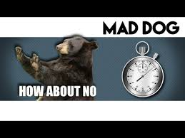 How About No Meme - how about no bear minute meme youtube