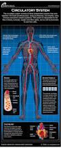 Human Anatomy Careers Alcohol Inks On Yupo Circulatory System Human Anatomy And Anatomy