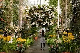 Botanical Garden Orchid Show Best Nyc Flower Shows Botanical Garden Orchid 2015 Sri