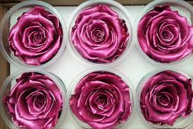 forever roses 6 pack metallic real preserved roses infinite roses 3 year
