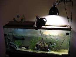 Zoo Med Light Fixture by Light Fixtures For Megaray Mercury Vapor Bulbs Habitats And