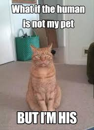 Thinking Cat Meme - what if the human is not my pet funny cat meme fuckin funny