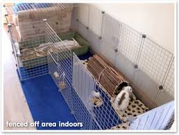 Rabbit Hutch For Multiple Rabbits What Size Hutch And Run Should I Get What Do Rabbits Live In