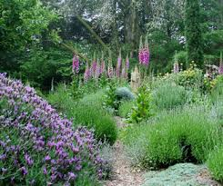 garden tips and advice drip irrigation for your garden landscape
