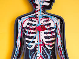 Anatomy The Human Body Paper Stop Motion Teaser For The Human Body Anatomy App Colossal