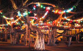 Best Pictures Of Christmas In by The Best Christmas Trees In The United States Travel Leisure